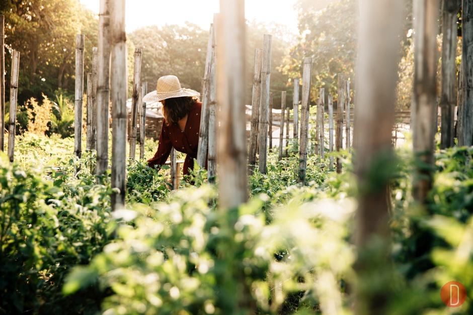 Amanpulo, Philippines - Organic Farm, Farm
