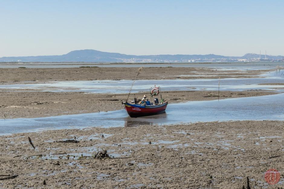 Alcácer do Sal Estuário do Sado