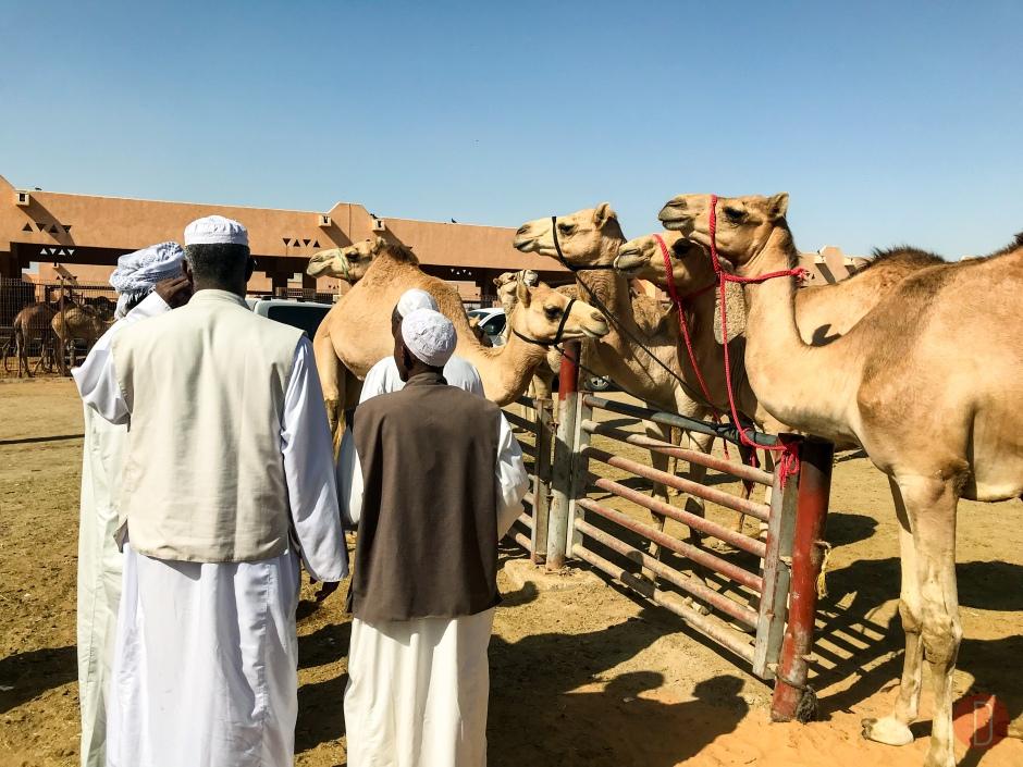 Al,Ain,Camel,Market