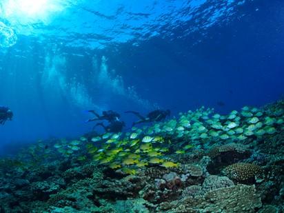 Le Recif Diving